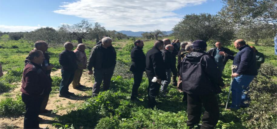 Büyükkonuk Zeytin Koop üyelerine zeytin ağacı bakımı üzerine eğitim verildi