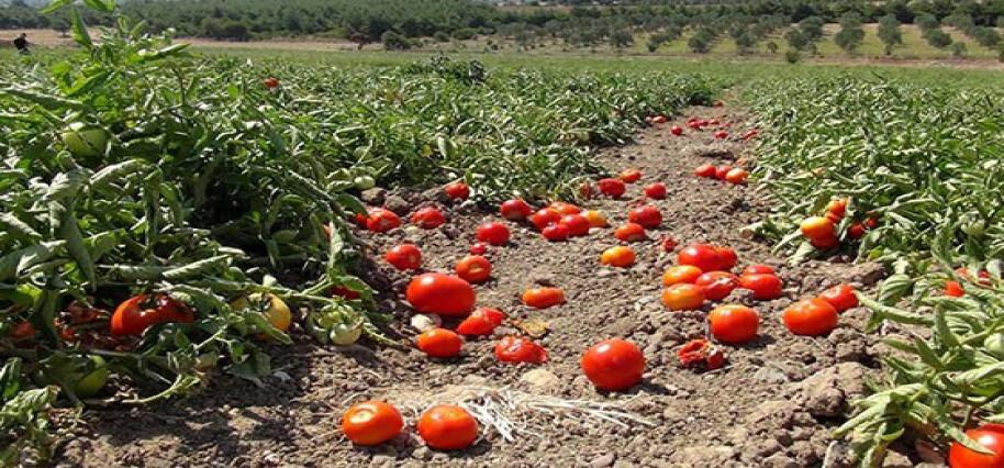 Tarım Dairesi eğitim çalışmalarına Serdarlı köyü ile devam ediyor