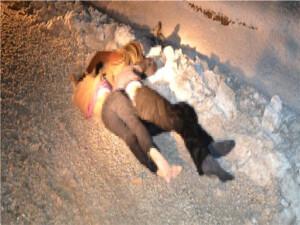 Yunanistan'da donan 6 düzensiz göçmenin cesedi bulundu