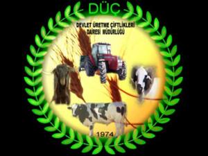 Devlet Üretme Çiftlikleri, küçükbaş ve büyükbaş hayvan satışına çıkıyor
