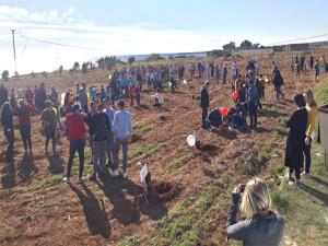 Kumyalı'da öğrenciler 100'e yakın ağaç dikti