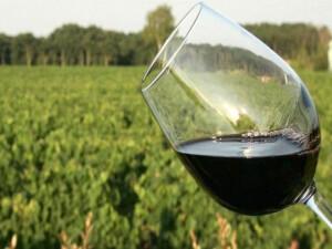 Şarabın tadında toprağın etkisi var mı?