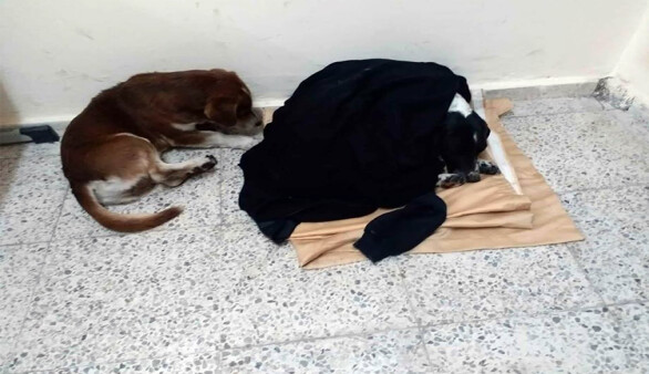 Anafartalar Lisesi öğrencilerinden örnek davranış: Yağmurda ıslanan köpekleri sınıfa aldılar