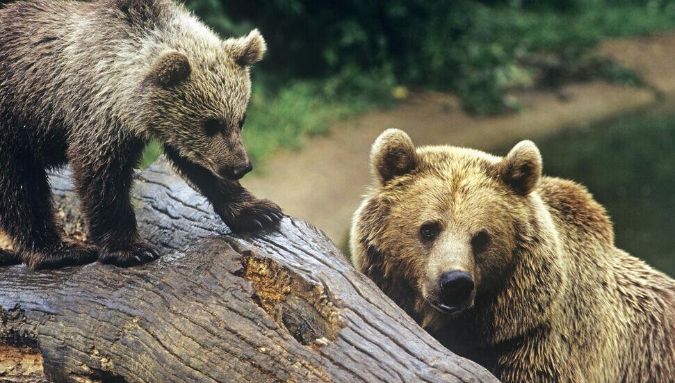 WWF'den korkutan rapor: Yaban hayatı nüfusu, 40 yılda yüzde 68 azaldı