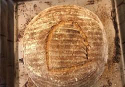 4500 yıllık mayadan ekmek pişirdi