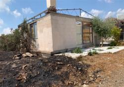 Baf'taki köpek barınağı ateşe verildi!