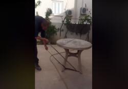 Eve giren yılan, Taşkent Doğa Parkı ekiplerince yakalanarak doğaya bırakıldı