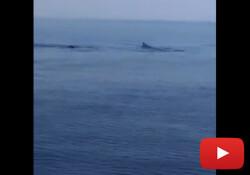 Karpaz'da balina ve köpek balığı sürüsü