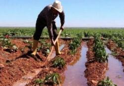 """Rum çiftçiler: """"Kıbrıs Türk arazilerinin yeniden kiralanmasına imkan sağlanmalı"""""""