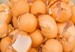 Yumurta kabuğunu sakın çöpe atmayın!