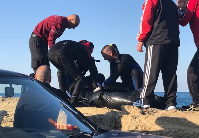 Karakız dalgalara teslim oldu... Cansız bedeni Girne Antik Liman'a vurdu