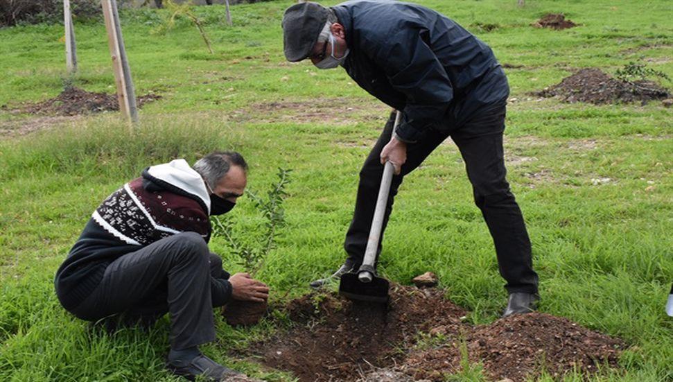 Δενδρύλλια φυτεύτηκαν στο Bellapais