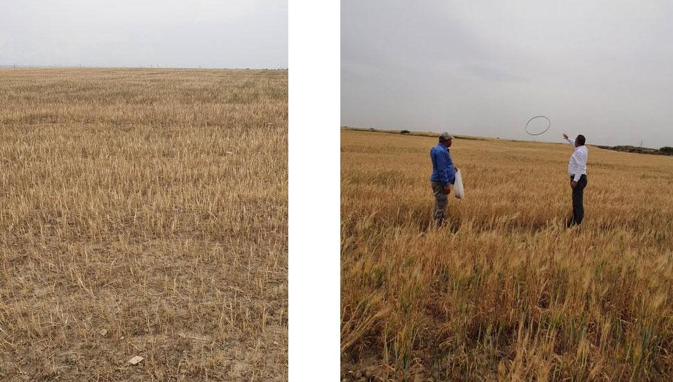 Έχουν ξεκινήσει μελέτες εκτίμησης ζημιών ξηρασίας …