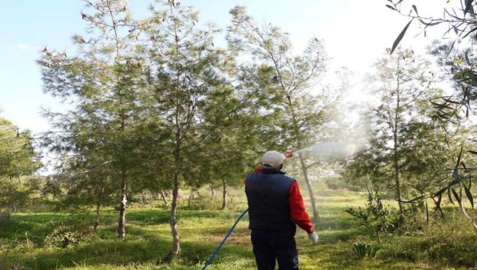 Ο Δήμος Iskele αρχίζει να πολεμά ενάντια στο σκαθάρι πεύκων